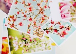 Favim.com-beautiful-blossoms-blue-celeste-cool-417425